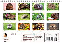 Igel 2019. Tierische Impressionen (Wandkalender 2019 DIN A4 quer) - Produktdetailbild 1