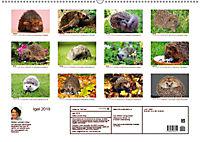 Igel 2019. Tierische Impressionen (Wandkalender 2019 DIN A2 quer) - Produktdetailbild 13