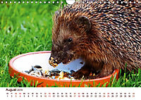 Igel 2019. Tierische Impressionen (Wandkalender 2019 DIN A4 quer) - Produktdetailbild 8