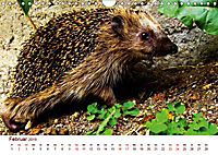 Igel 2019. Tierische Impressionen (Wandkalender 2019 DIN A4 quer) - Produktdetailbild 2