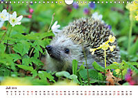 Igel 2019. Tierische Impressionen (Wandkalender 2019 DIN A4 quer) - Produktdetailbild 7