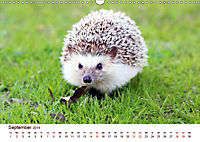 Igel 2019. Tierische Impressionen (Wandkalender 2019 DIN A3 quer) - Produktdetailbild 9