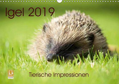 Igel 2019. Tierische Impressionen (Wandkalender 2019 DIN A3 quer), Steffani Lehmann