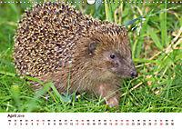 Igel 2019. Tierische Impressionen (Wandkalender 2019 DIN A3 quer) - Produktdetailbild 4