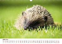 Igel 2019. Tierische Impressionen (Wandkalender 2019 DIN A3 quer) - Produktdetailbild 6