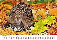 Igel 2019. Tierische Impressionen (Wandkalender 2019 DIN A3 quer) - Produktdetailbild 10