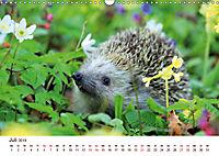 Igel 2019. Tierische Impressionen (Wandkalender 2019 DIN A3 quer) - Produktdetailbild 7