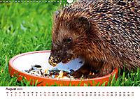Igel 2019. Tierische Impressionen (Wandkalender 2019 DIN A3 quer) - Produktdetailbild 8