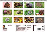 Igel 2019. Tierische Impressionen (Wandkalender 2019 DIN A3 quer) - Produktdetailbild 13