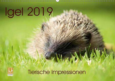 Igel 2019. Tierische Impressionen (Wandkalender 2019 DIN A2 quer), Steffani Lehmann