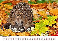 Igel 2019. Tierische Impressionen (Wandkalender 2019 DIN A2 quer) - Produktdetailbild 10