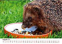 Igel 2019. Tierische Impressionen (Wandkalender 2019 DIN A2 quer) - Produktdetailbild 8