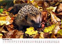 Igel 2019. Tierische Impressionen (Wandkalender 2019 DIN A2 quer) - Produktdetailbild 11