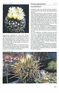 Illustrierte Kakteen-Enzyklopädie - Produktdetailbild 3