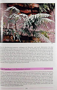 Illustriertes Lexikon der Zimmerpflanzen - Produktdetailbild 3