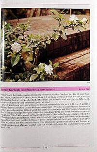 Illustriertes Lexikon der Zimmerpflanzen - Produktdetailbild 4