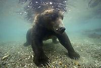 Im Land der Bären - Produktdetailbild 9