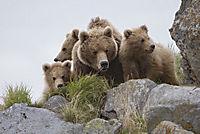 Im Land der Bären - Produktdetailbild 10