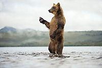 Im Land der Bären - Produktdetailbild 1