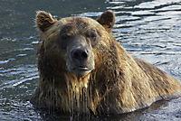 Im Land der Bären - Produktdetailbild 5