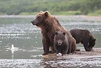 Im Land der Bären - Produktdetailbild 3