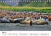 Im Reich der Pinguine (Tischkalender 2019 DIN A5 quer) - Produktdetailbild 5