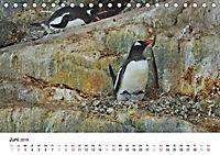 Im Reich der Pinguine (Tischkalender 2019 DIN A5 quer) - Produktdetailbild 6
