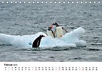 Im Reich der Pinguine (Tischkalender 2019 DIN A5 quer) - Produktdetailbild 2