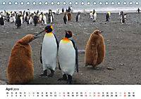 Im Reich der Pinguine (Tischkalender 2019 DIN A5 quer) - Produktdetailbild 4