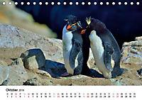Im Reich der Pinguine (Tischkalender 2019 DIN A5 quer) - Produktdetailbild 10