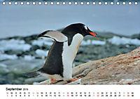 Im Reich der Pinguine (Tischkalender 2019 DIN A5 quer) - Produktdetailbild 9