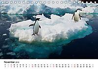 Im Reich der Pinguine (Tischkalender 2019 DIN A5 quer) - Produktdetailbild 11