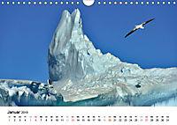 Im Reich der Pinguine (Wandkalender 2019 DIN A4 quer) - Produktdetailbild 1