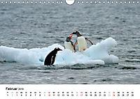 Im Reich der Pinguine (Wandkalender 2019 DIN A4 quer) - Produktdetailbild 2