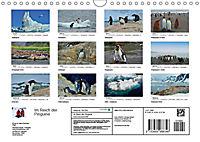 Im Reich der Pinguine (Wandkalender 2019 DIN A4 quer) - Produktdetailbild 13