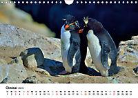 Im Reich der Pinguine (Wandkalender 2019 DIN A4 quer) - Produktdetailbild 10