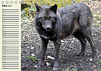 Im Rudel Zuhause - Der Wolf (Tischkalender 2019 DIN A5 quer) - Produktdetailbild 9