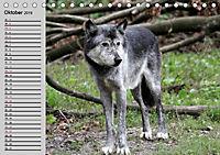 Im Rudel Zuhause - Der Wolf (Tischkalender 2019 DIN A5 quer) - Produktdetailbild 1