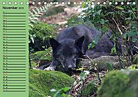 Im Rudel Zuhause - Der Wolf (Tischkalender 2019 DIN A5 quer) - Produktdetailbild 5