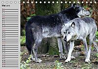 Im Rudel Zuhause - Der Wolf (Tischkalender 2019 DIN A5 quer) - Produktdetailbild 11