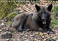 Im Rudel Zuhause - Der Wolf (Tischkalender 2019 DIN A5 quer) - Produktdetailbild 8