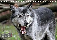 Im Rudel Zuhause - Der Wolf (Tischkalender 2019 DIN A5 quer) - Produktdetailbild 2
