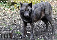 Im Rudel Zuhause - Der Wolf (Tischkalender 2019 DIN A5 quer) - Produktdetailbild 3