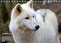 Im Rudel Zuhause - Der Wolf (Tischkalender 2019 DIN A5 quer) - Produktdetailbild 12