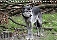 Im Rudel Zuhause - Der Wolf (Tischkalender 2019 DIN A5 quer) - Produktdetailbild 10