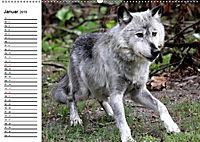 Im Rudel Zuhause - Der Wolf (Wandkalender 2019 DIN A2 quer) - Produktdetailbild 1