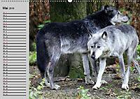 Im Rudel Zuhause - Der Wolf (Wandkalender 2019 DIN A2 quer) - Produktdetailbild 5