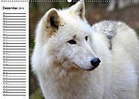 Im Rudel Zuhause - Der Wolf (Wandkalender 2019 DIN A2 quer) - Produktdetailbild 12