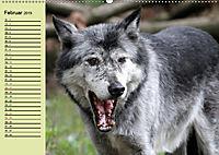 Im Rudel Zuhause - Der Wolf (Wandkalender 2019 DIN A2 quer) - Produktdetailbild 2