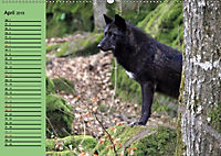 Im Rudel Zuhause - Der Wolf (Wandkalender 2019 DIN A2 quer) - Produktdetailbild 4